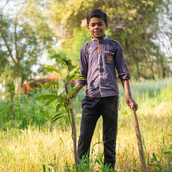 saplings drip irrigation