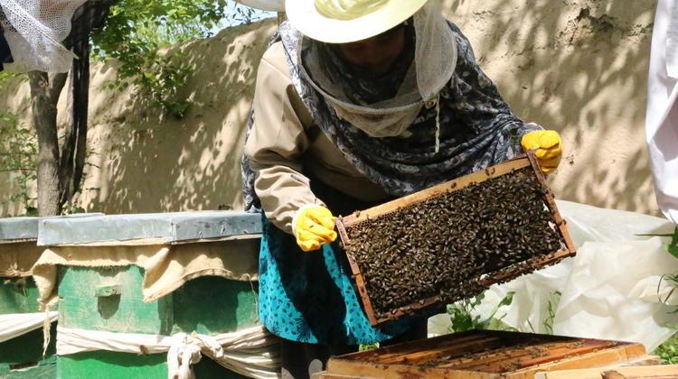 Sadgul, Afghanistan beekeeper